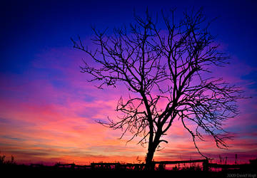 Lonely Tree by DavidVogt
