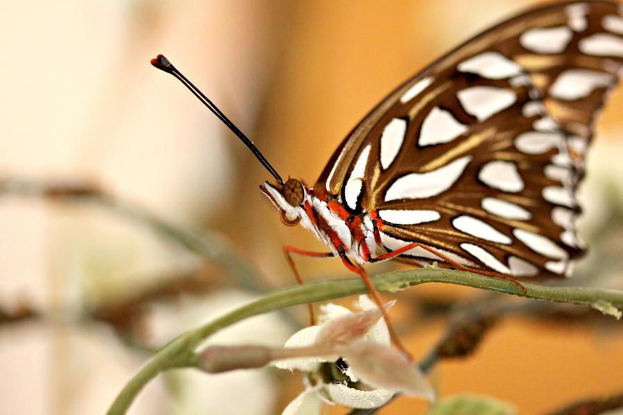 Little butterfly by Necronacreum