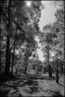 Driveway by Davenwolf