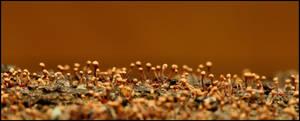 Hemitrichia clavata by Davenwolf