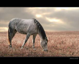 -horse- by xxbone