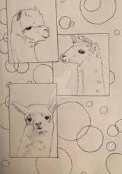 Llamas by MakeArtReal