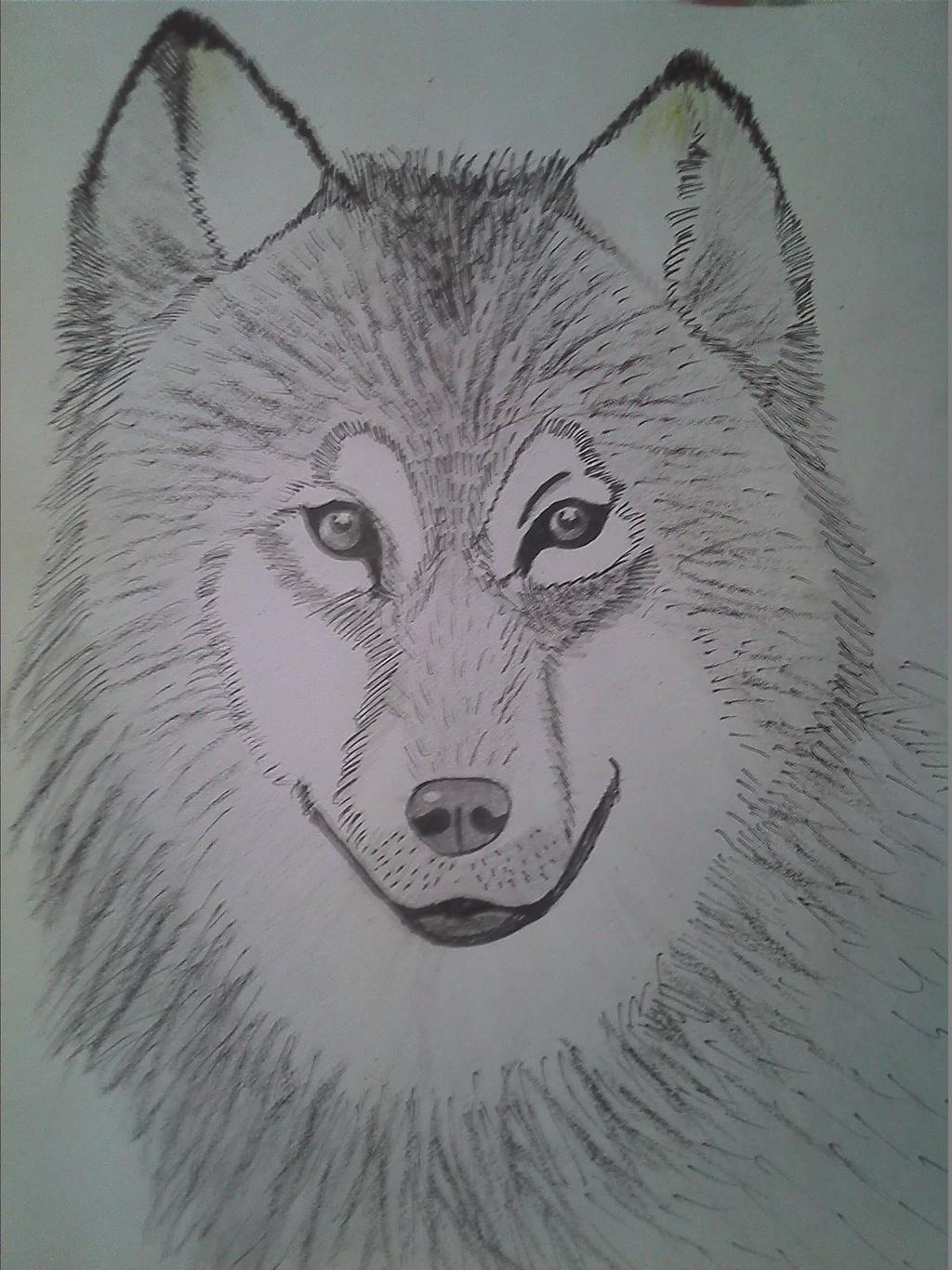 Wolf by ZeeShiKing