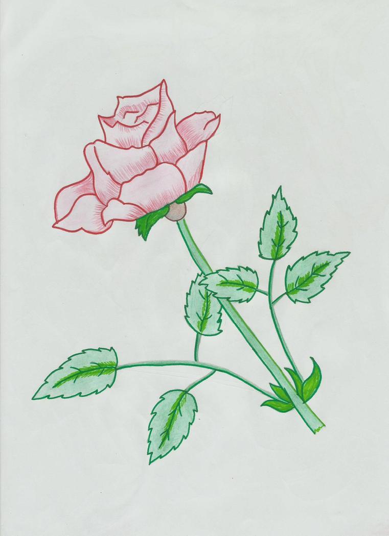 Rose by ZeeShiKing