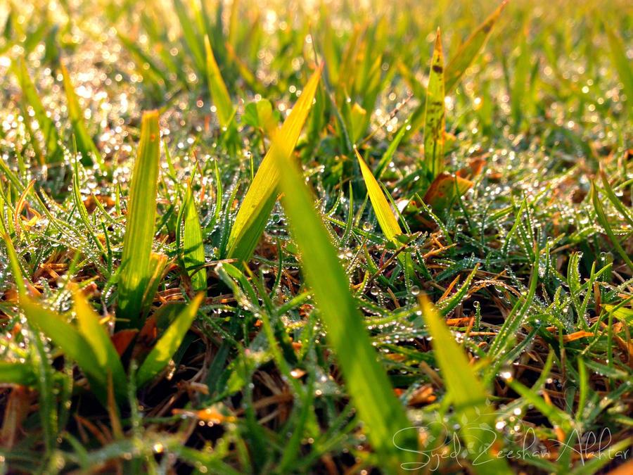 Morning Dew by ZeeShiKing
