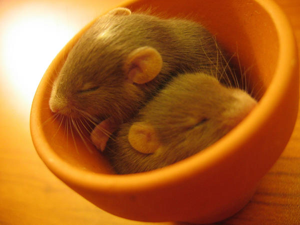 Toffifee mice O__o by Nawiedzona94