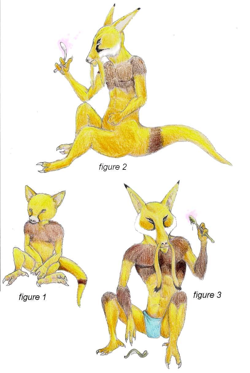 Abra Pokemon Evolution...