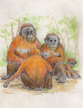 Hongsenlinanthropus mianensis