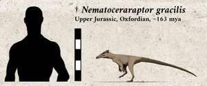Nematoceraraptor gracilis by yoult
