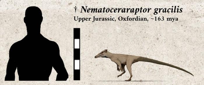 Nematoceraraptor gracilis