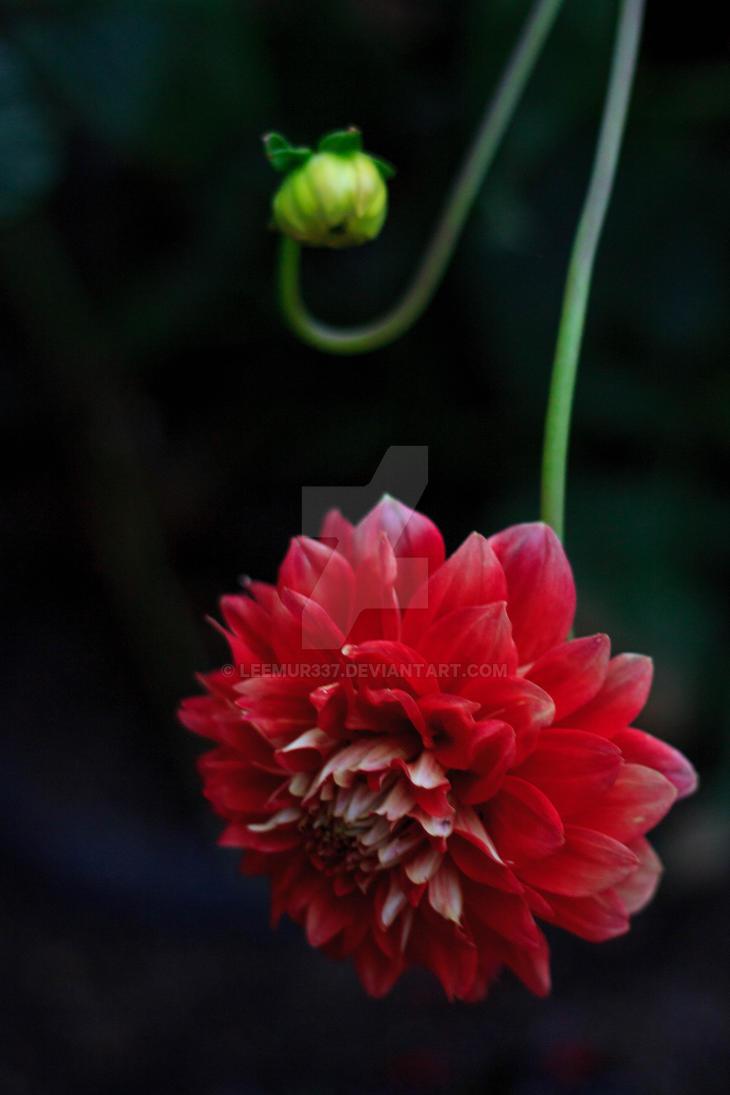 Getty Garden by leemur337