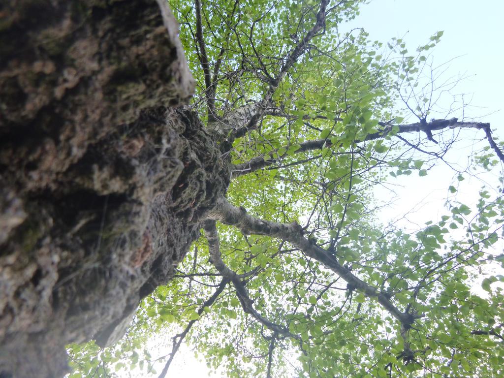 random tree! by u-yes-u-i-love-u