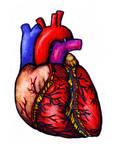 Heart by Volpenera94