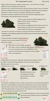 Vegetation RUS