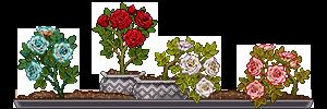 z02_standard_roses_by_miirshroom-dbmdy3s.png