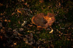Mushrooms Fall First