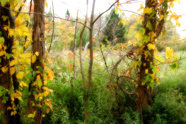 Autumn, 2007 - III by photopixie