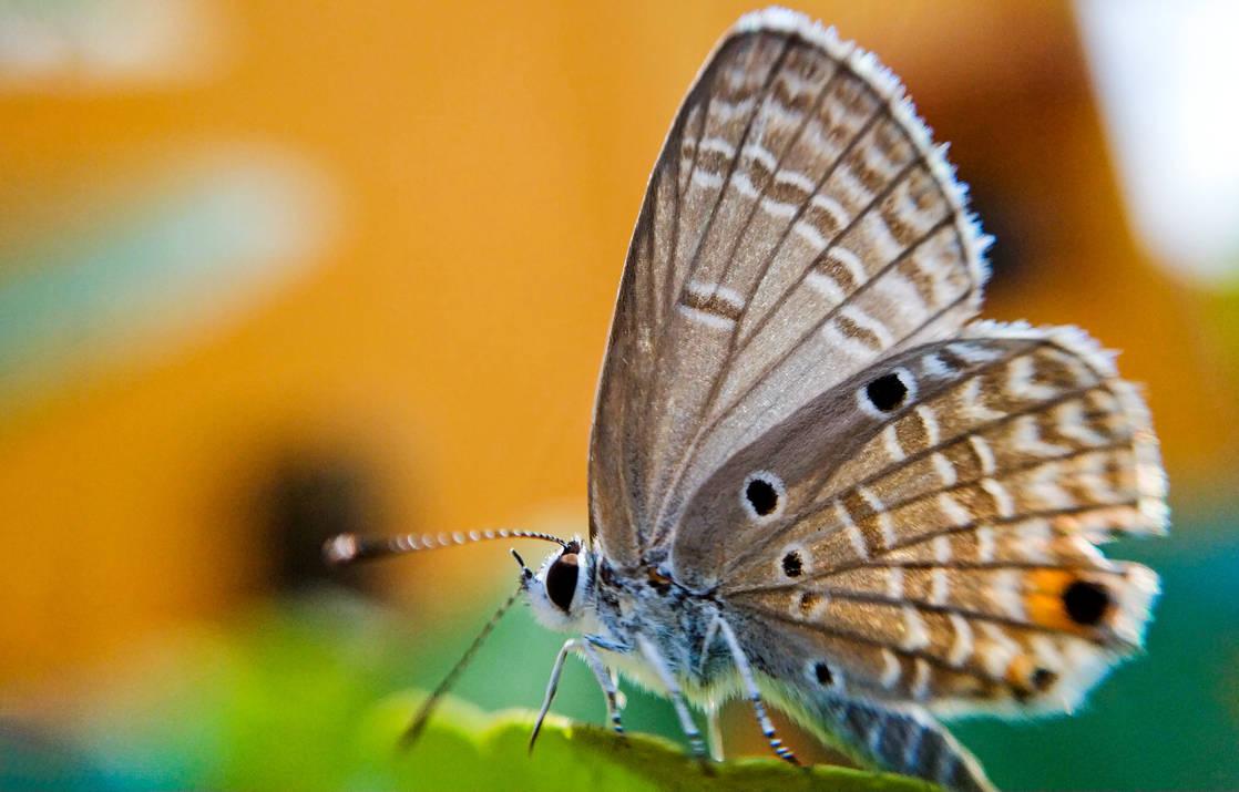    Moth   