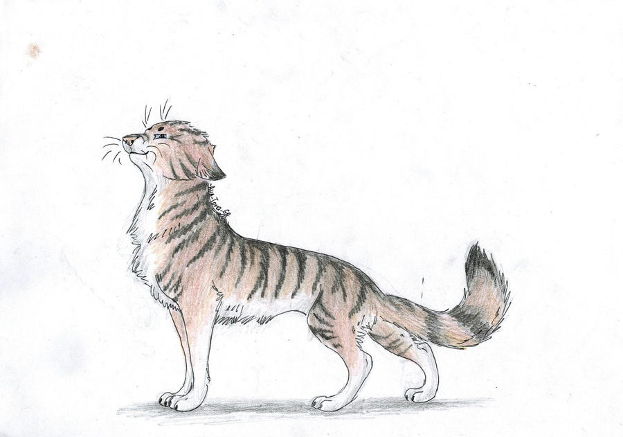 Cat by Aka-Tora-Ge