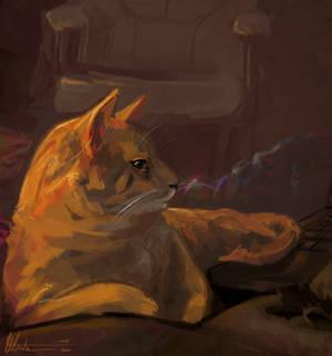 Gimpy-cat