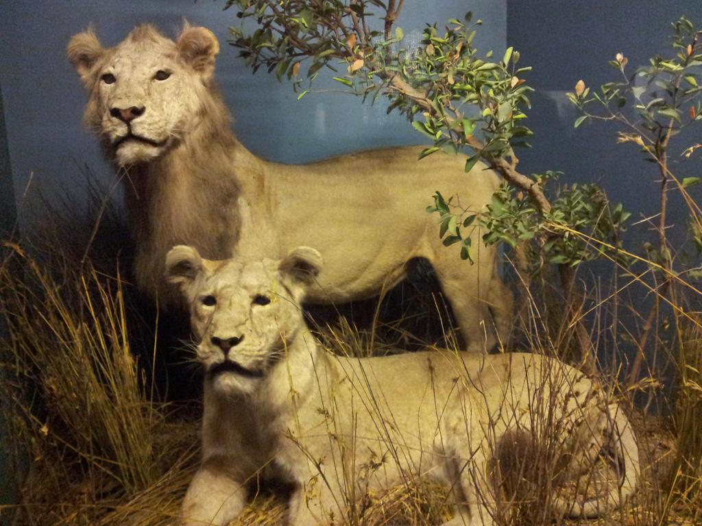 American Museum Of Natural History Careers