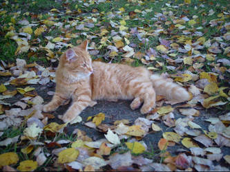 Kitty in the Fall III by NocturnalMoonWolf