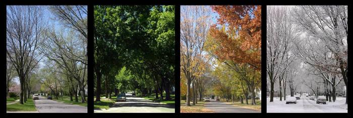 Seasons Project - 1 New Photo