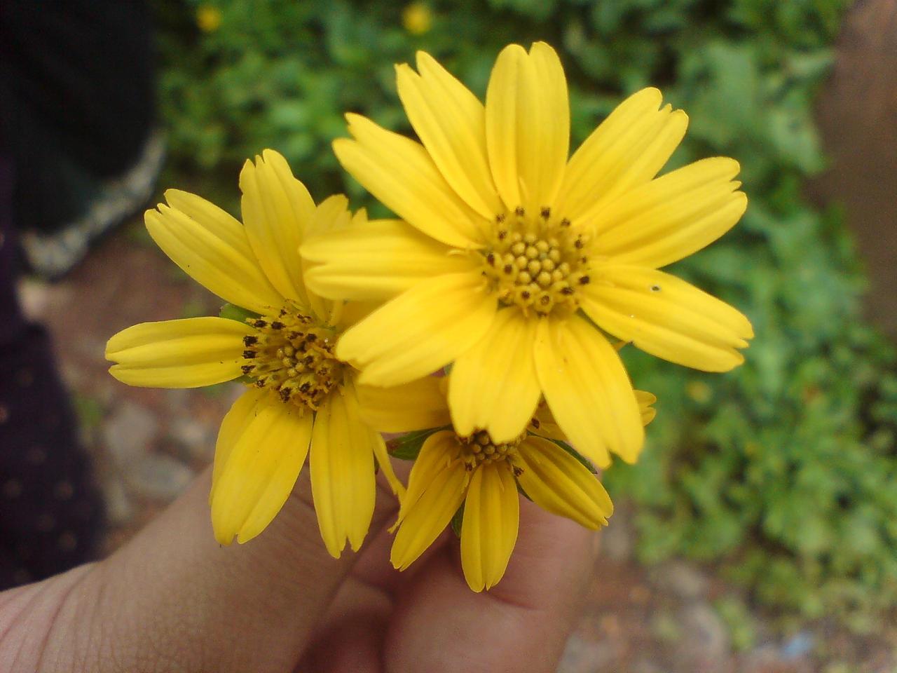 Oh so yellow pt2 by allajunaki