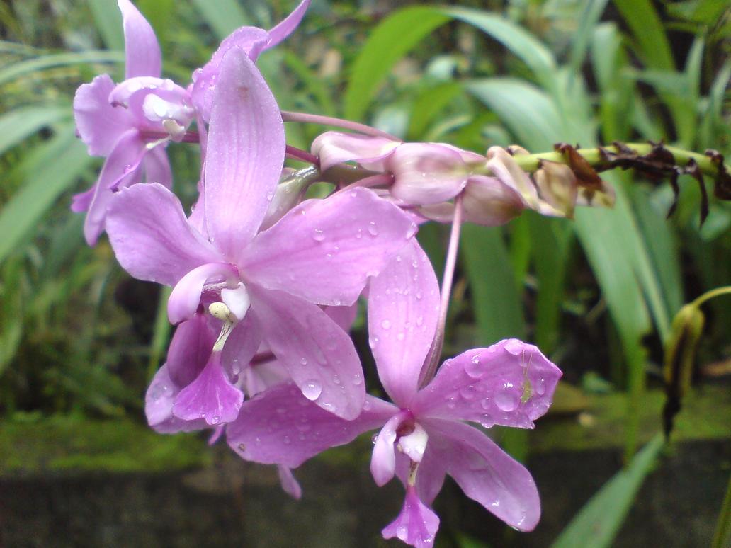Purplexed by allajunaki
