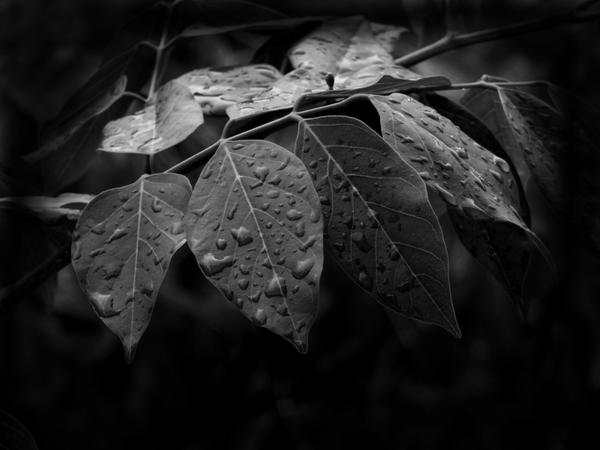 Leaves in rain by allajunaki