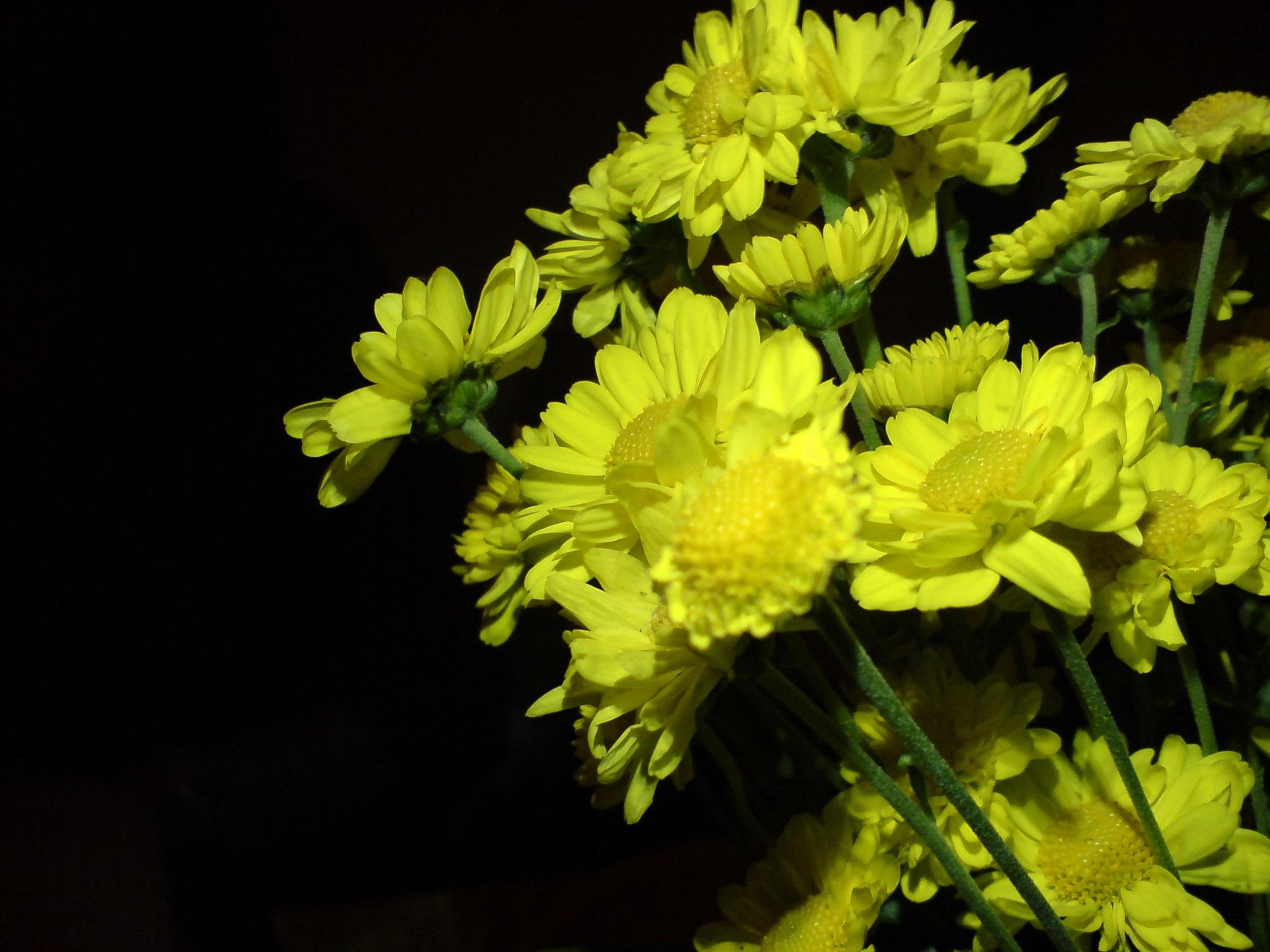 Oh so yellow... by allajunaki