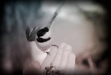 Little Bird, Fly Away