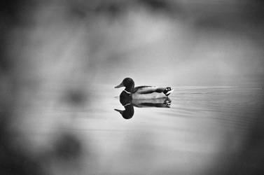 Random Duck