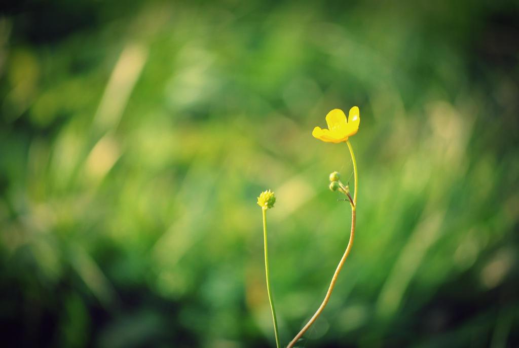 Posledni z kvetin by aliiiie