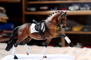 First Dressage Set by NyxVivendi