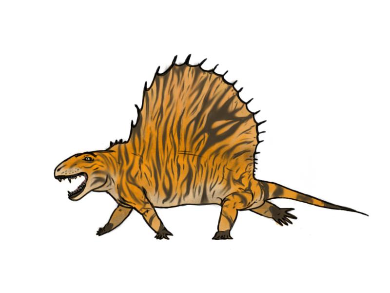 Dimetrodon by dinomaster15