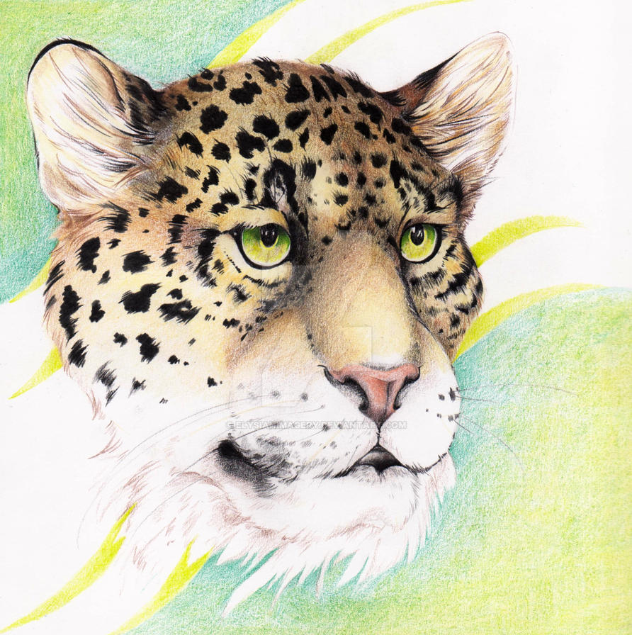 Leopard by ElysianImagery