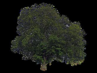 -LindaM Baum Tree 002