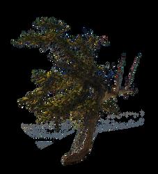 -LindaM Baum Tree 003