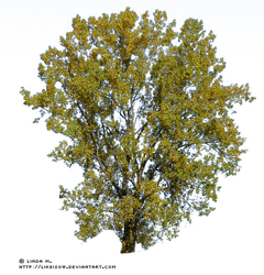 -LindaM Baum Tree 004
