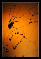 Spider + Sunset 2 revised by lovablepsycho