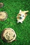 dog in Heaven
