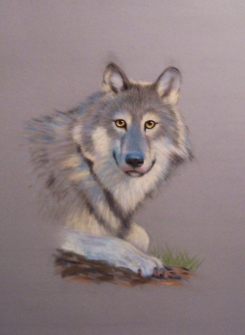 Wolf by ronnietucker