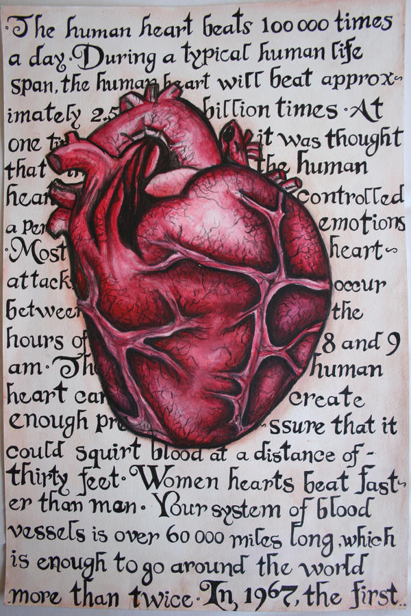 human heart by ylem-03 on DeviantArt