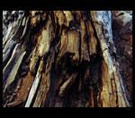 Beach wood four