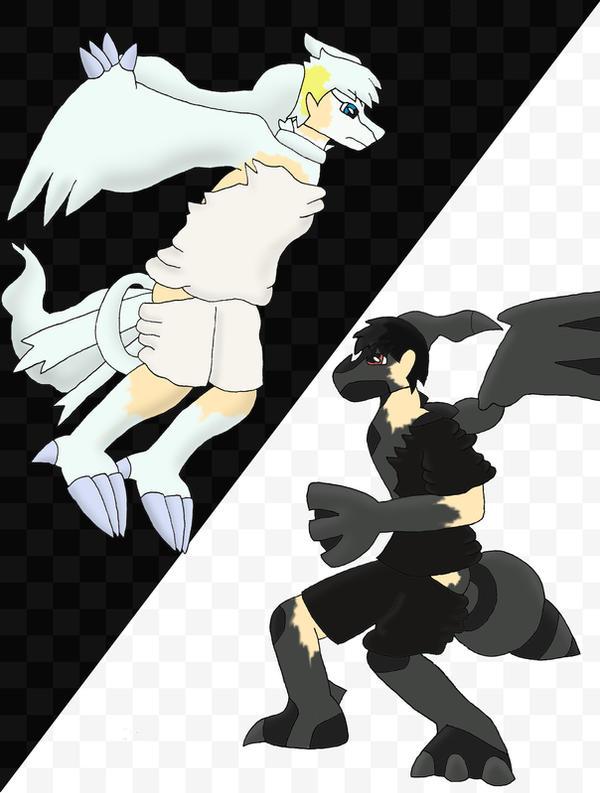 pokemon black and white legendaries wallpapers image ...