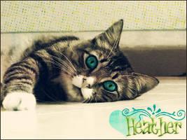 kitty id