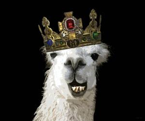 King Llama by AlexFly