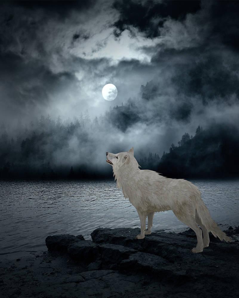 Under the Dark Moon