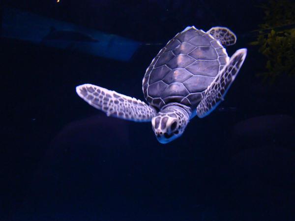 Sea turtle time (hora de la tortuga marina)